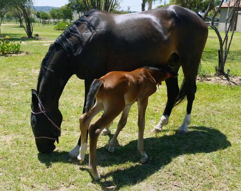 Proud owner Leoni van der Burgh's horse Bel Ami with her new foal