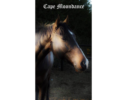 Cape Moondance proudly owned by Monique Cadle
