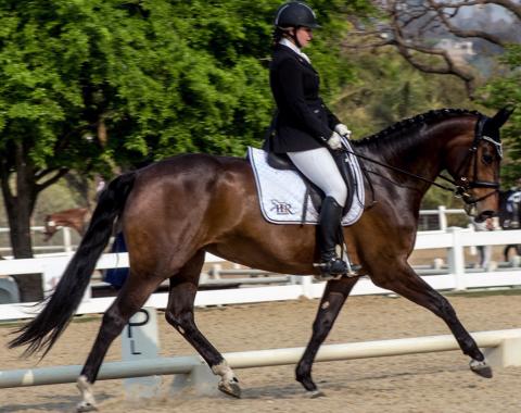 Simone Howarth's beautiful mare Show Special (Prada)