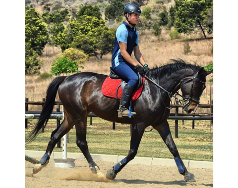 Emile Egen of Jumangi's Equestrian Centre and his stunning Popeyethesailorman