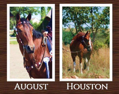 Bronwen Strydom's two beautiful horses