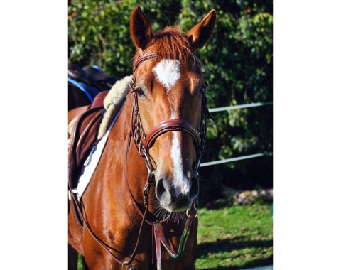 Meghan West's beautiful girl Limited Edition- proudly insured by Arco 360