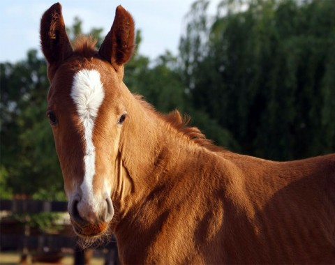 Liesel Whittington's beautiful horse Conriano