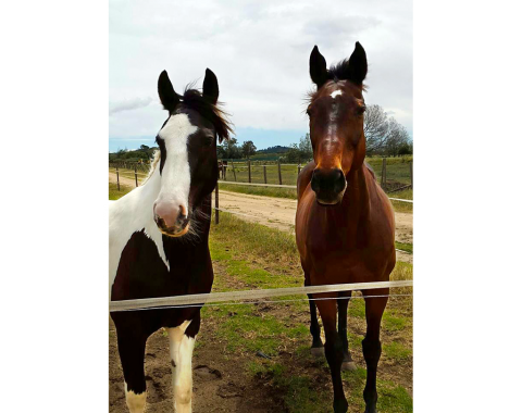 Christa Seydaack's two beautiful horses, Anchor Boy and Silky