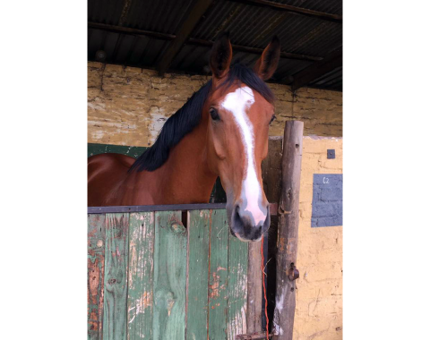 Congratulations to Laura Thomas on her wonderful new mare Davenport Prada, we wish you everything of the best with her