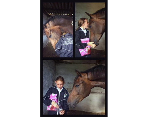 Jenna-Lee Glancey welcomes her new boy, Maxstar Dark Knight to his new home in the rolling hills of KZN