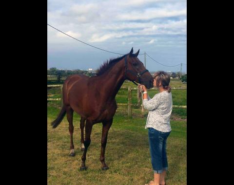Mizel Reynder's horse Astro News
