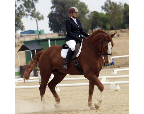 Kate Queiroz's beautiful horse Legacy's Bon Chance