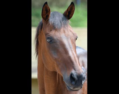 Natalie Wessels' beautiful horse, Raise A Phoenix