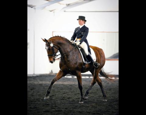 Anna Buchanan's beautiful horse, Balmoral