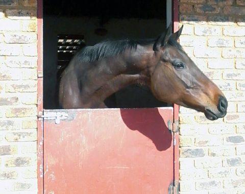 Enge Smit's beautiful horse Miss Tee