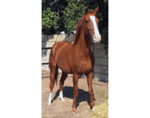 Celeste Du Toit's beautiful horse Sleipner
