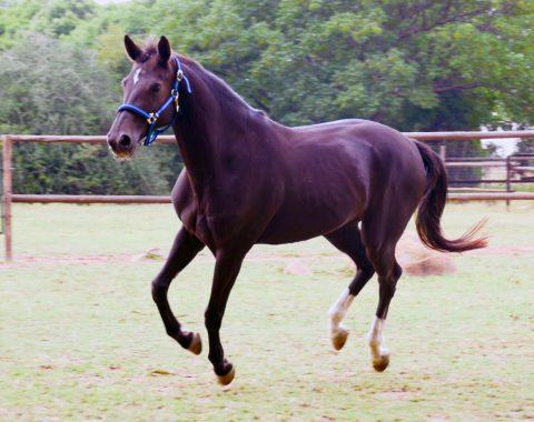 Naairah Motala's new horse Mossandi Lindt