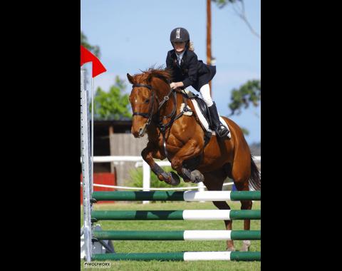 Barbara Venables' beautiful horse Royal Harrods