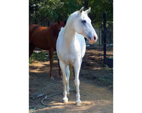 McCloud, such a beautiful boy, owned by Jacqui Jamison