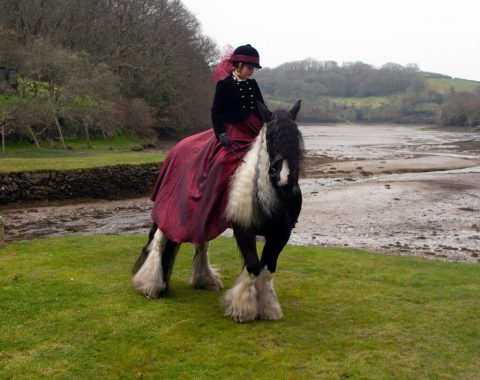 The absolutely gorgeous Gypsey Cob, Charlie