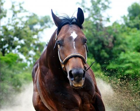 Monique Matthee's horse – high Function