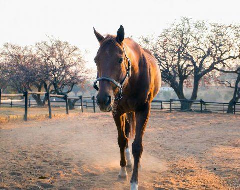 Zoë Armstrong's beautiful horse Jungle Call