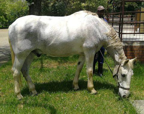 Babette Gallard's horse Binky