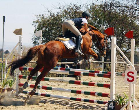 Samantha Snyder's horse Coastal Cruise