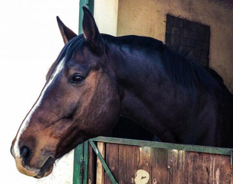 Daniela Gil's new horse Eagle's Wild Coast aka Coasti