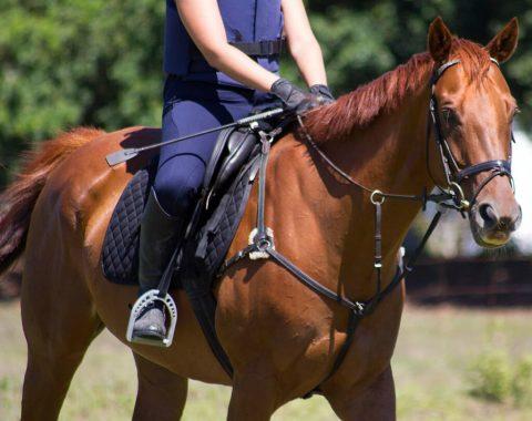 Jacky Brunette's beautiful horse, Sting