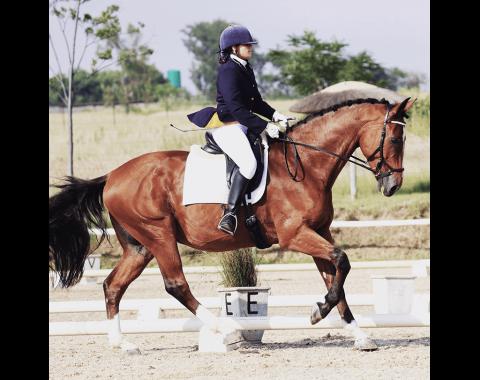 Natalie Venter's beautiful horse Chevignon Lavender Blue