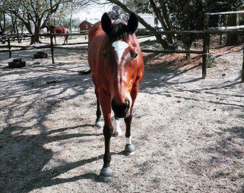 Jordan Farrell's horse Colour Supplement