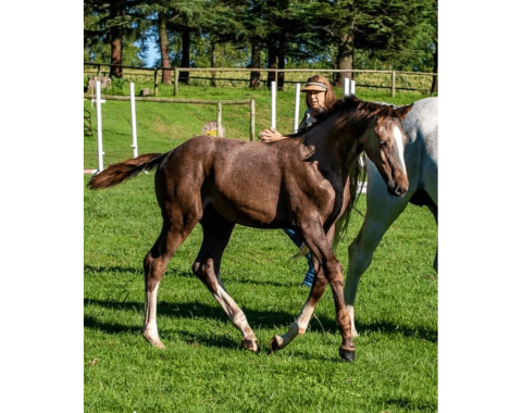 Rivervale Inferno, owned by Kendal Artz-Wood