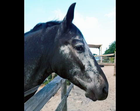 Leizel Benjafield's horse Dream Catcher