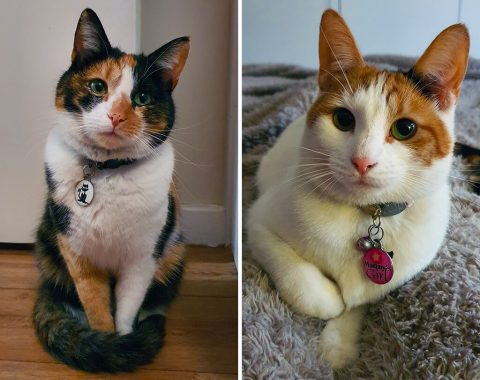 Hannelize Coetzee's domestic shorthair felines, Lily and Missy