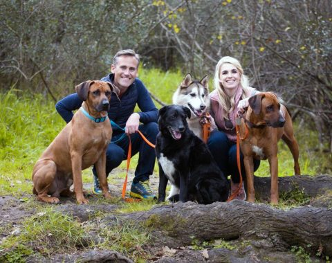 Lara Whittaker and her beautiful family. Everest is a stunning Grey Husky Cross, Toga a beautiful Rhodesian Ridgeback, Diesel a gorgeous Border Collie Cross Labrador and Jagger a stunning Ridgeback