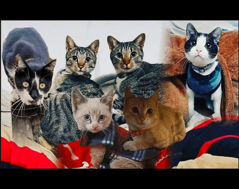Rene Hoffman Jensen's feline furry friends Aspen, Lilly, Daisy, Rocket and Rose