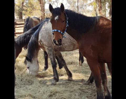 Christell Stander's beautiful horse Potfontein Soldaat aka Trooper