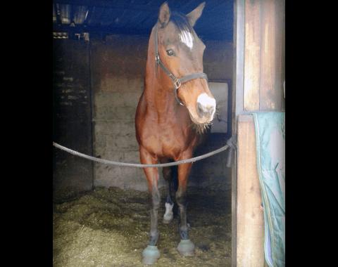Danielle Botma's horse Ghani