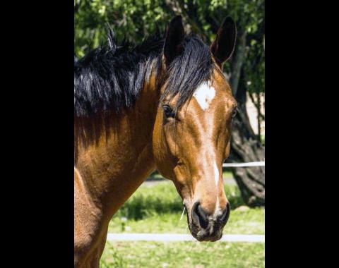 Kathleen Allan's beautiful horse Winter Axe