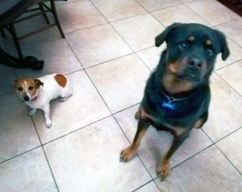 These two beautiful fur kids Kaiser and Molly belong to our client Jonathan Bryan