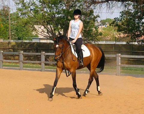 Michelle Prius' horse Dream Jet