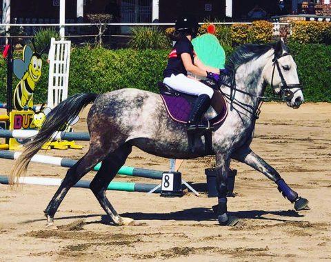 Michelle Prius' horse Starlight