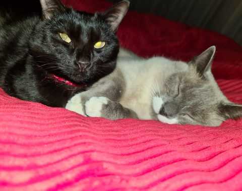 These Feline Babies are Kiro and Tinkerbell owned by Natasha Theron
