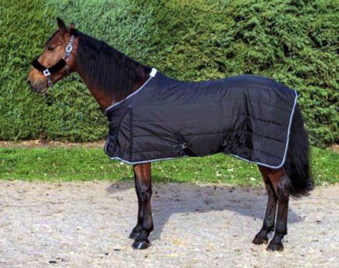 Erika Pretorius' new stallion, Duque CCCXV