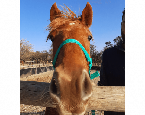 Golden Whiskey, owned by Veronica and Robert