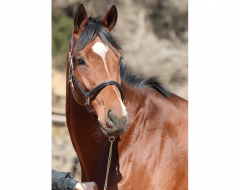 Robert and Veronica's horse Ali Bon Dubai