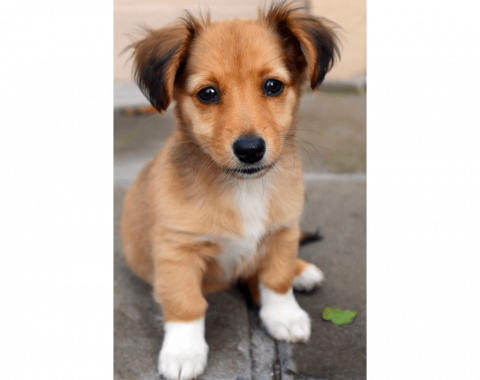 This beautiful Jack Russell Cross named Bear Growls belongs to our client Neil Joseph