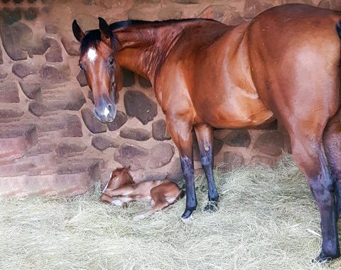 Professor Cheryl McCrindle's beautiful mare, Magnum with Style and her foal