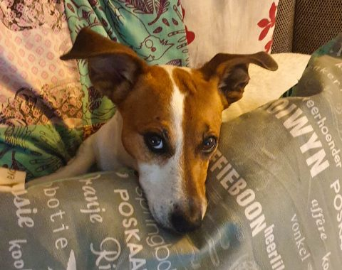Annelie Cronje and her beautiful Jack Russell, Terrier Maya