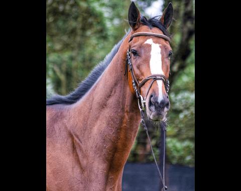 Corne De Bruyn's beautiful horse Bhaltair