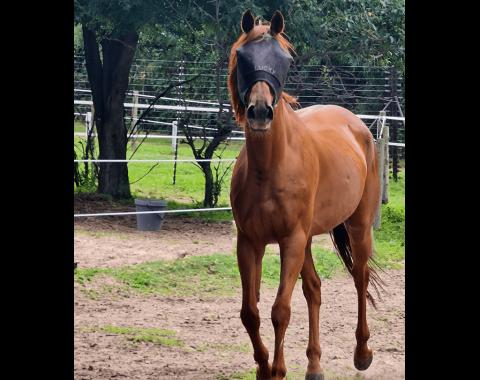 Mel Watson's horse, Lucky