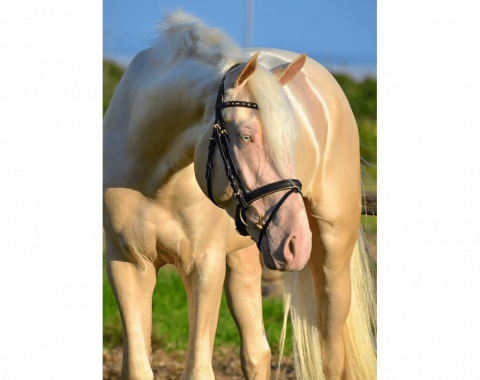 The handsome stallion, Midas-Touch Atlantis